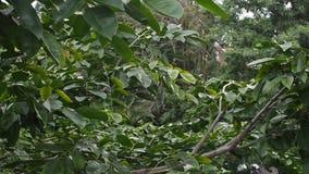 Täta trädfilialer som blåser i liten vind, passerar lager videofilmer
