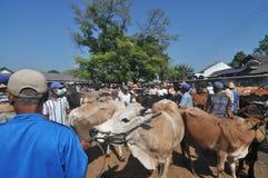 Tätigkeit am traditionellen Kuhmarkt während der Vorbereitung von Eid al-Adha in Indonesien Lizenzfreies Stockbild