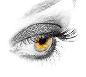 tätt öga för black upp Fotografering för Bildbyråer