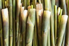 tätt övre för bambu Royaltyfri Bild