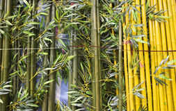 tätt övre för bambu Arkivfoton
