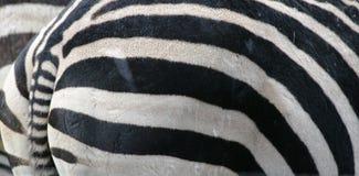 tätt övre för djur Arkivbild