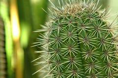 tätt övre för kaktus Fotografering för Bildbyråer