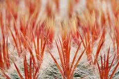 tätt övre för kaktus Arkivfoto