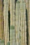tätt övre för kaktus royaltyfria foton