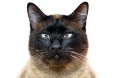 tätt övre för katt Arkivfoto