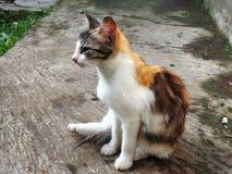 tätt övre för katt Royaltyfria Bilder
