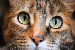 tätt övre för katt Royaltyfri Fotografi