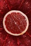 tätt avsnitt för orange red för korsgrapefrukt upp Royaltyfri Bild