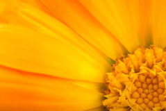 tätt blom- för bakgrund som skjutas upp Arkivbild