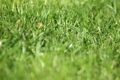 tätt gräs upp Arkivfoton