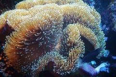 tätt hav för anemon upp Arkivbilder