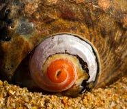 tätt havsskal upp Fotografering för Bildbyråer