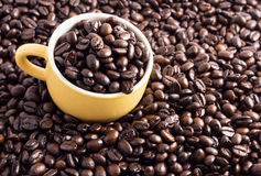 tätt kaffe för böna som skjutas upp Arkivfoton