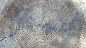 tätt korn upp trä Arkivfoto