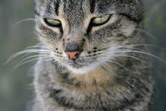 tätt med textsidan upp för katt Royaltyfri Foto