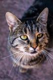 tätt nätt övre för katt royaltyfri foto