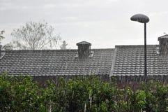 Tätt regn för sommar i eftermiddagen i parkera Arkivbild