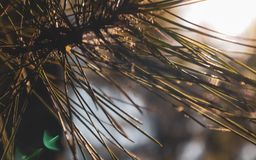 Tätt upp att sörja trädfilialen arkivbild