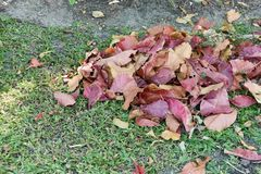 Tätt upp att trava färgrika torra sidor på gräs i trädgård royaltyfria bilder