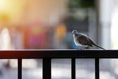 Tätt upp en fågel klamra sig fast intill staketet royaltyfria bilder