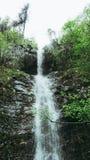 T?TT UPP: F?rnyande str?mvatten som fl?dar ner mossa, t?ckte bruna stenar i en h?rlig gr?n skog i Montenegro Filmiskt skott arkivfoto