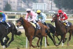tävlings- hästar Arkivfoton