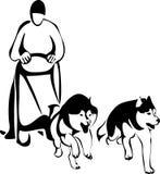 Tävlings- hundkapplöpning för släde från två Siberian Huskies Royaltyfri Illustrationer