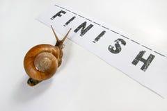 tävlings- snail royaltyfri fotografi