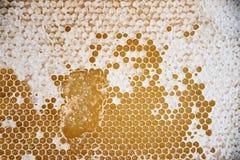 tła zamknięty honeycomb wizerunek zamknięty Beekeeping pojęcie zdjęcia stock