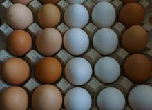 Tło od bielu i brązu kurczaka domowych jajek Żywność organiczna zdjęcia royalty free