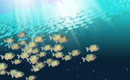 Tło, szkoła ryba w rzece piranhas, Nadwodny życie Optymalizujący od używać w dekoracji, wiele Pacu, ilustracja ilustracja wektor