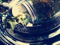 Tło wysuszeni ziele fotografia royalty free