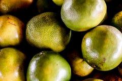 tłustoszowate i świeże pomarańcze fotografia stock