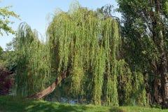 Tårpil på Marne River banker arkivfoton