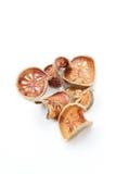Tè asciutto della frutta di cotogno del bengala su fondo bianco Immagine Stock