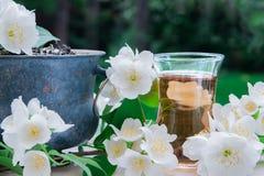 Tè bianco del gelsomino con i fiori del gelsomino Immagine Stock Libera da Diritti