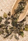 Tè bianco del Peony immagini stock libere da diritti