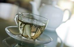 Tè bianco in tazza trasparente Immagine Stock Libera da Diritti