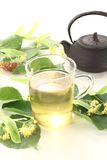 Tè caldo fresco del fiore di tiglio Fotografia Stock