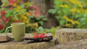 Tè caldo in una tazza su una foresta del ceppo archivi video