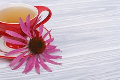 tè con l'echinacea su una tavola di legno immagini stock libere da diritti