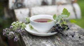 Tè con un ribes e un origano Immagini Stock