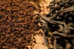 Tè contro caffè Foglie e polvere Fotografia Stock