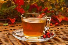 Tè del cinorrodo di autunno Immagine Stock Libera da Diritti