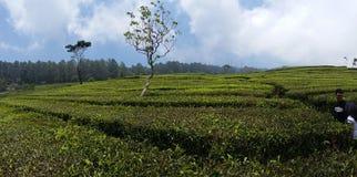 Tè del giardino Fotografie Stock