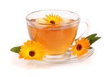 Tè della calendula con i fiori freschi isolati su fondo bianco Immagine Stock Libera da Diritti