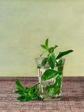 Tè della menta fresca servito in un vetro Immagine Stock