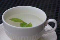 Tè della menta in una tazza Immagine Stock