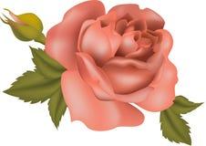 Tè della Rosa royalty illustrazione gratis